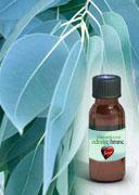 Etericno-ulje-eukaliptusa
